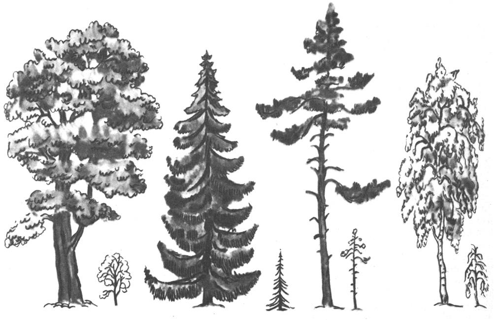 уроки рисования деревьев карандашом онлайн