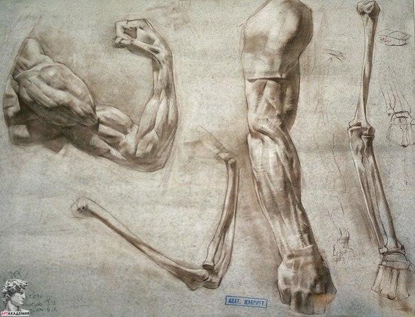 как-рисовать-руку-человека