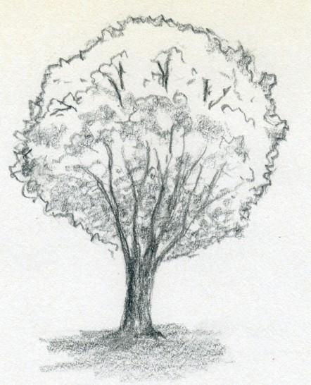 курсы рисования рассказвают как рисовать дерево