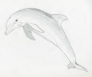 уроки-рисования-как-рисовать-дельфина-10
