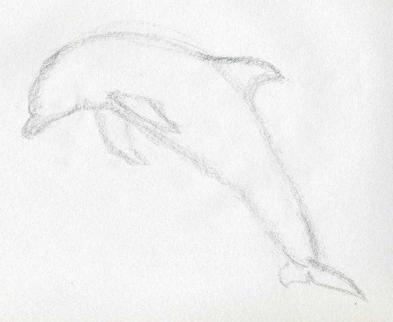 уроки-рисования-как-рисовать-дельфина3