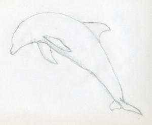 уроки-рисования-как-рисовать-дельфина4