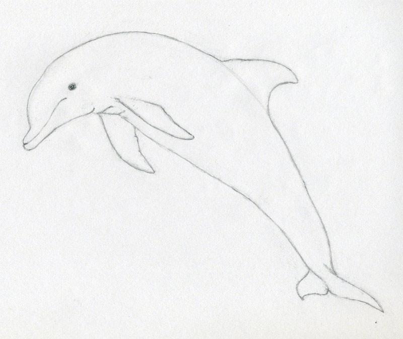 уроки-рисования-как-рисовать-дельфина5