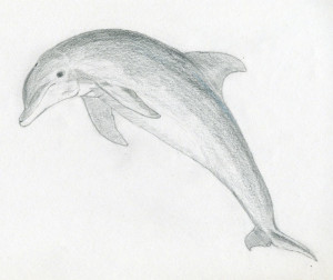 уроки-рисования-как-рисовать-дельфина6