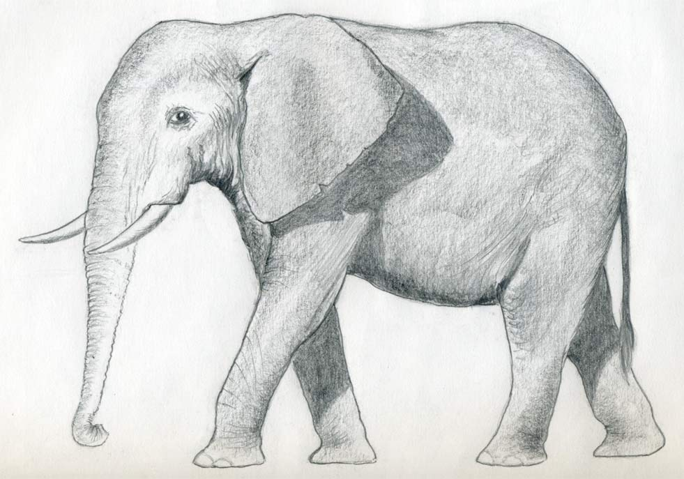 уроки-рисования-как-рисовать-слона