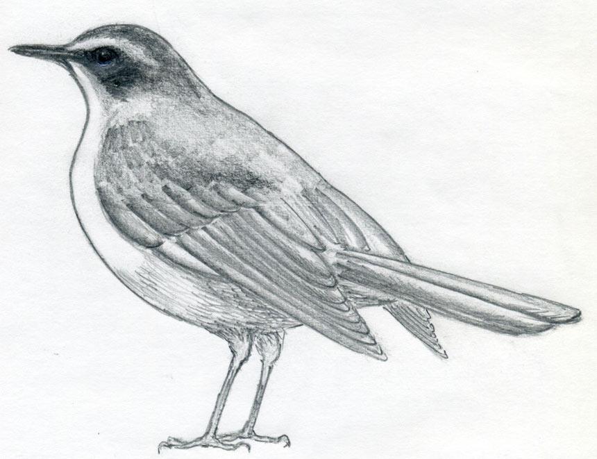 отличный рисунок птицы.