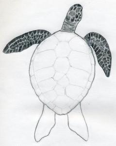 уроки-рисования-черепаха17