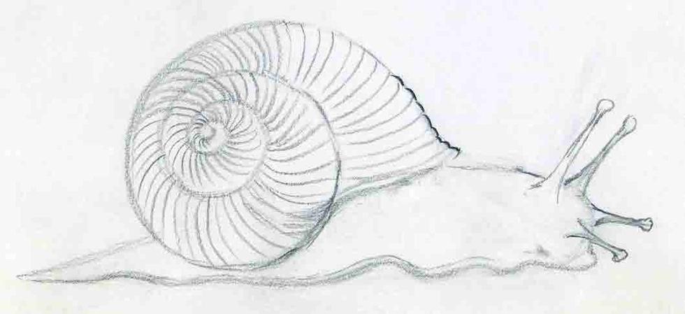 художественная-школа_как_рисовать_улитку