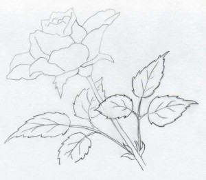 уроки-рисования-как-рисовать-розу-карандашом