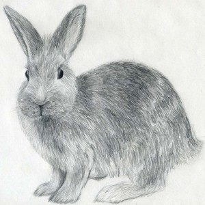 уроки-рисования-как-рисовать-кролика1