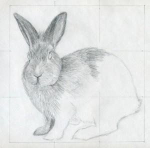 уроки-рисования-как-рисовать-кролика5