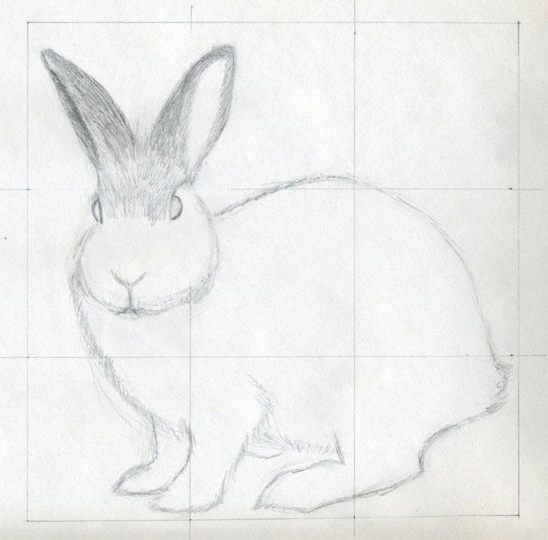 уроки-рисования-как-рисовать-кролика4