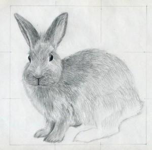 уроки-рисования-как-рисовать-кролика7
