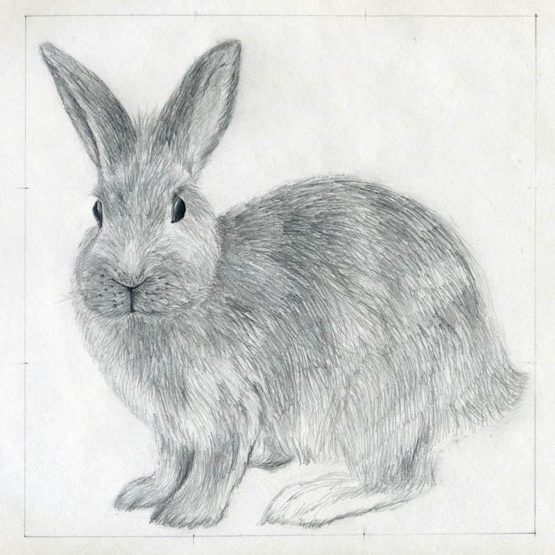 уроки-рисования-как-рисовать-кролика8