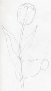 уроки-рисования-тюльпан-рисунок