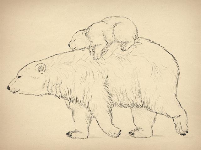 урок-рисования-как-рисовать-медведя1