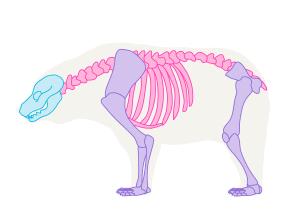 урок-рисования-как-рисовать-медведя2