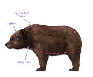 урок-рисования-как-рисовать-медведя6