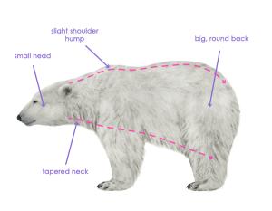 урок-рисования-как-рисовать-медведя7