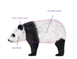 урок-рисования-как-рисовать-медведя9