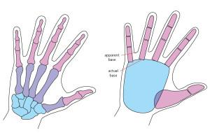 уроки-рисоваия-руки-в-Артакадемии