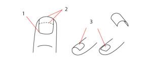 уроки-рисования-кури-ногти
