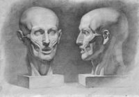 голова-человека-на-курса-академического-рисунка-для-2д-иллюстраторов