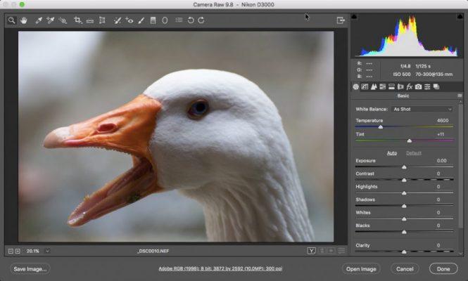 инструмент-камера-роу-пример-использование-на-курсах-фотошопа-Артакадемия