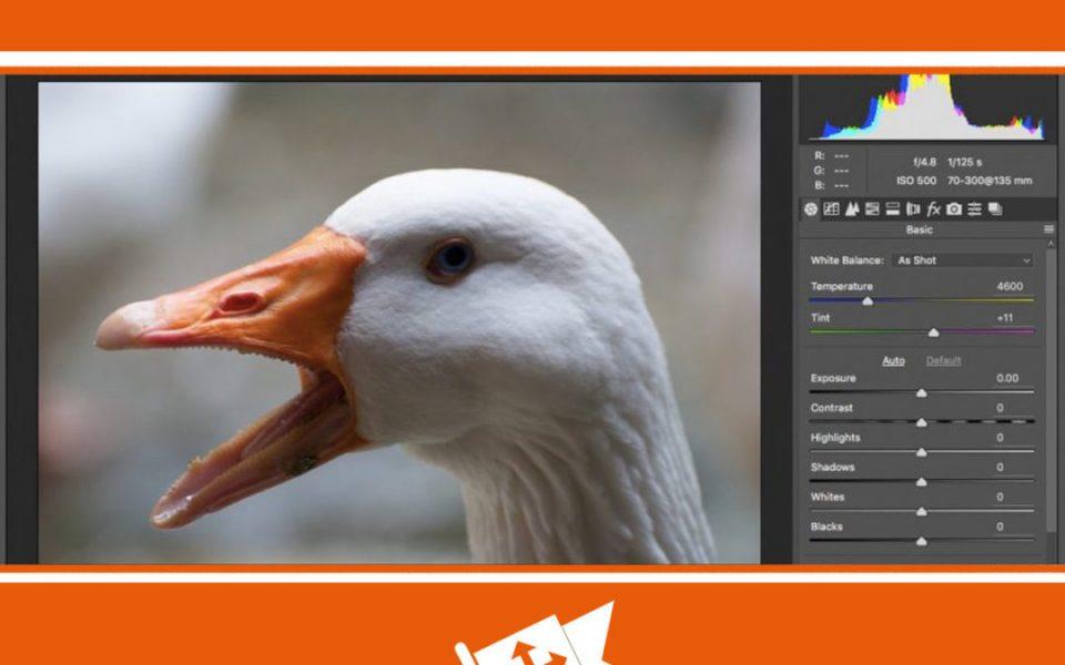 primer-ispolzovanja-camera-raw-na-kursah-fotoshopa