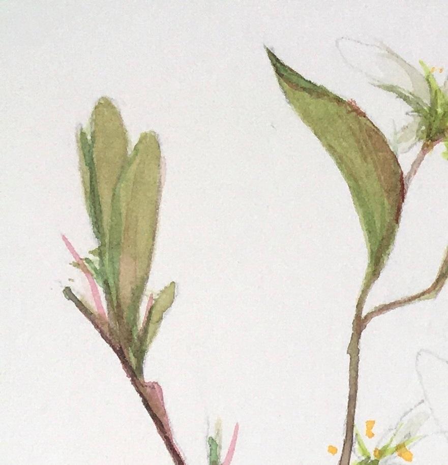деталь цветка