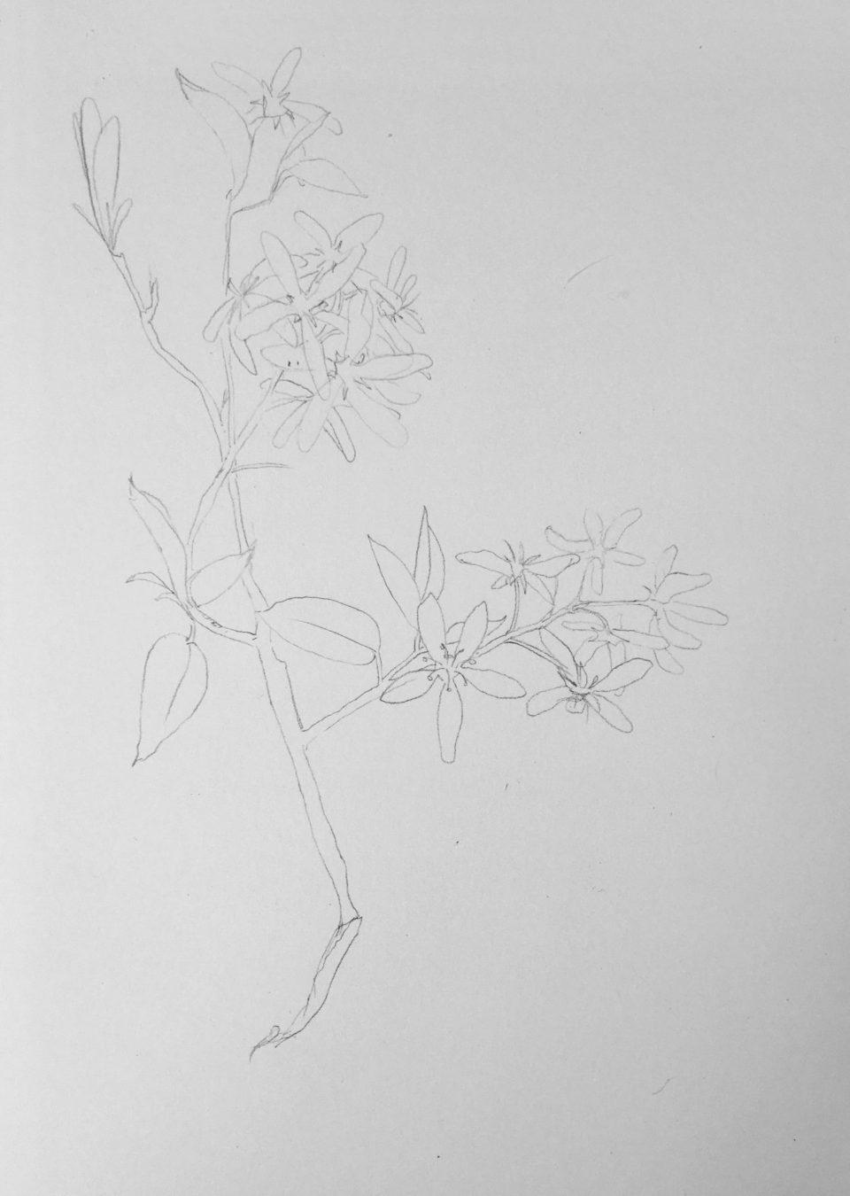 предварительный рисунок карандашом на мастер классе по ботанике