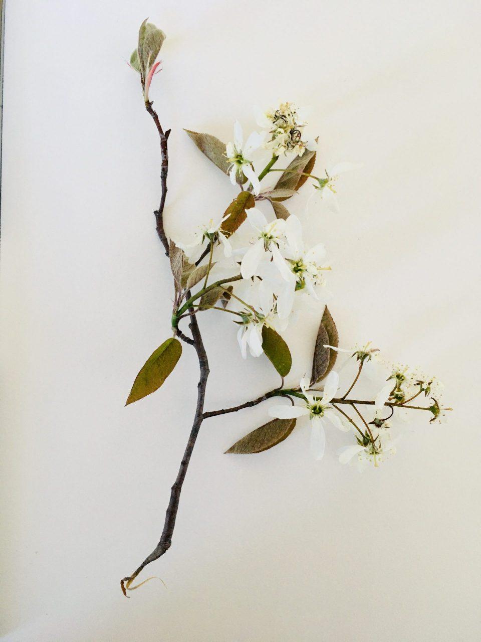 пример цветов для мастер класса по живописи растений