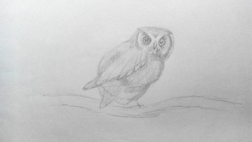 как нарисовать сову краандашом
